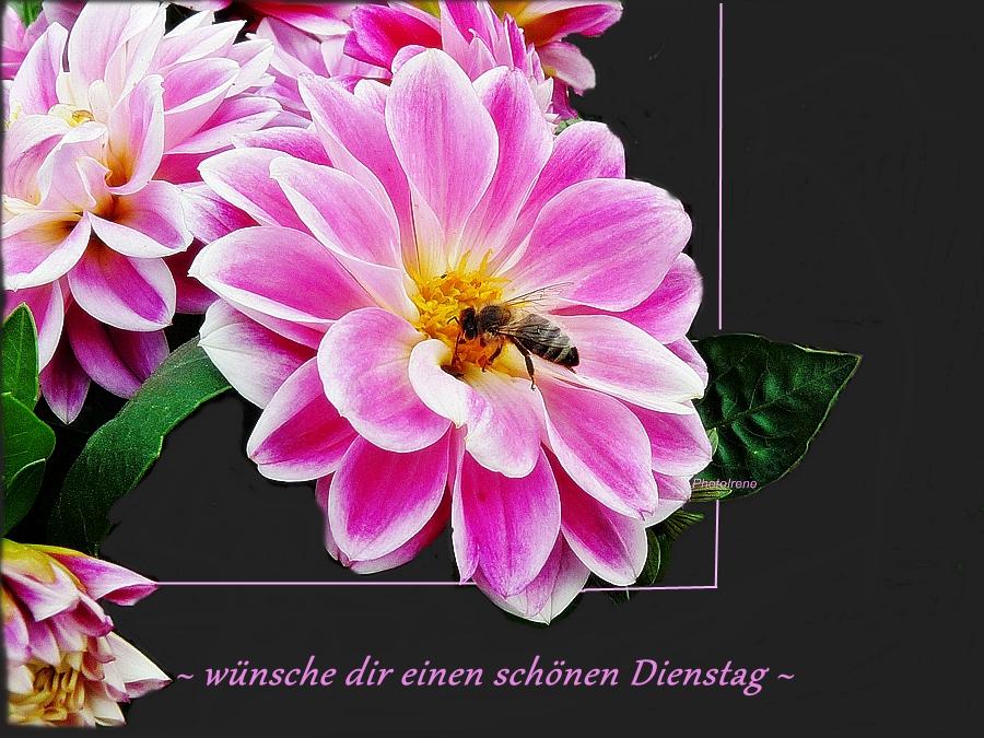 Wünsche Dir Einen Schönen Dienstag Foto Bild Pflanzen Pilze