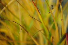 ... wünsche euch ein schönes Herbstwochende