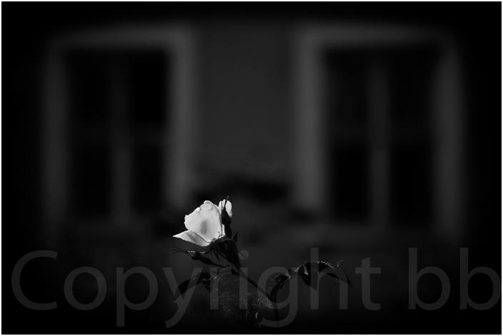 Wünsdorf 15 - Rose vor verlassener Kaserne