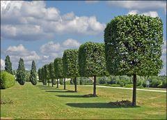 Würfelbäume