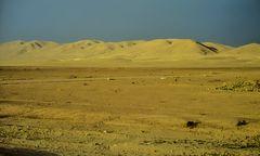 Wüste.   .120_4321