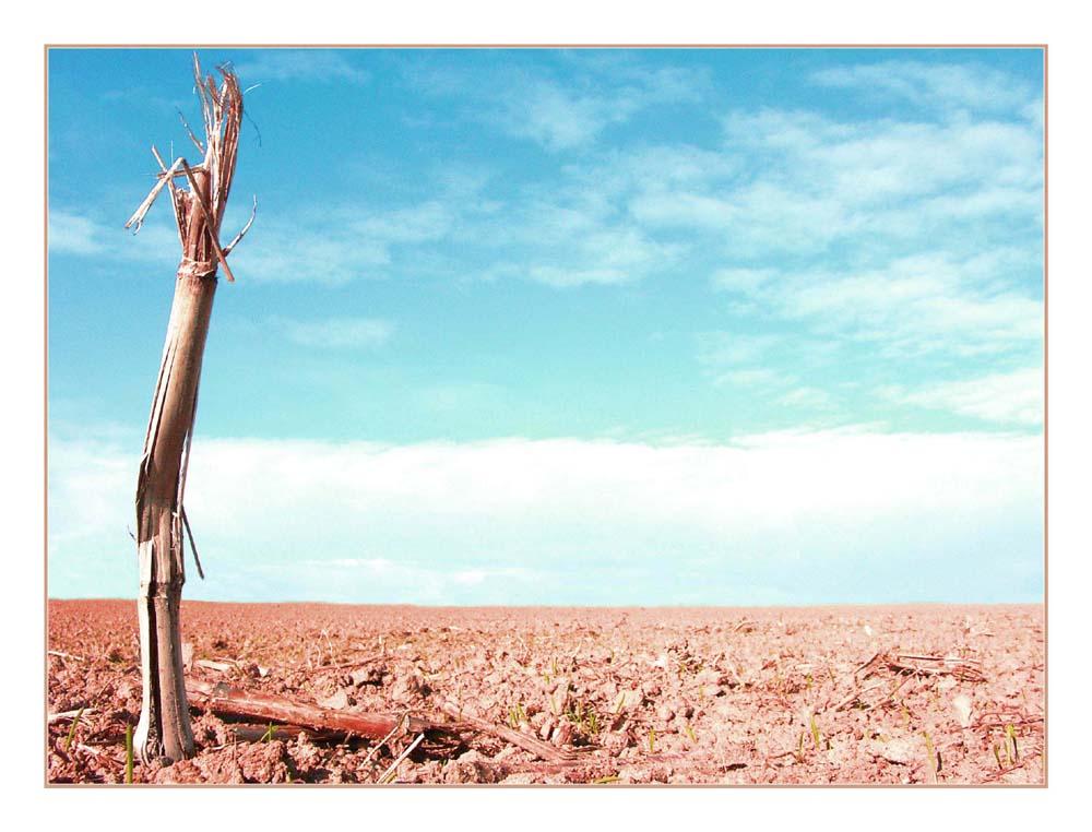 Wüste 2