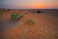 ... Wüste ...