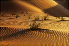 Wüste (4)
