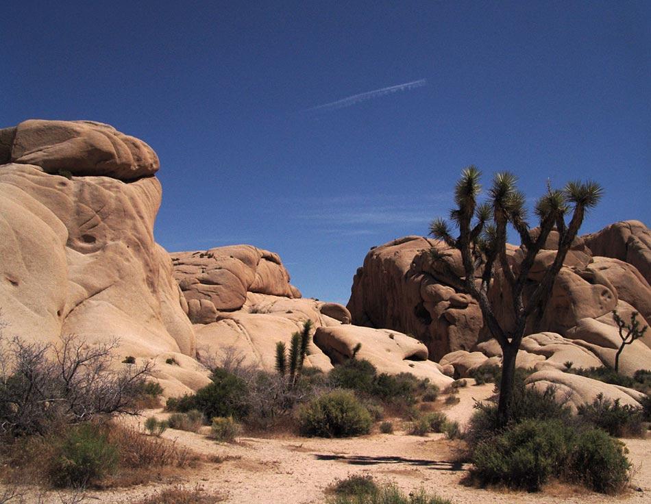 Wüste (Yoshua-Tree)