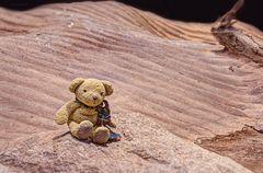 Wüsten-Bär