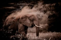 Wüsten Elefant - Namibia