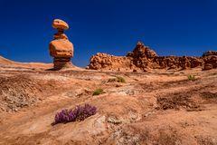 Wüstenblumen, Goblin Valley, Utah, USA