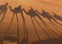 Wüstenerlebnis