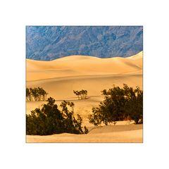 wüstenfeeling . . . . . auch im death valley