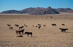 Wüstenpferde 2