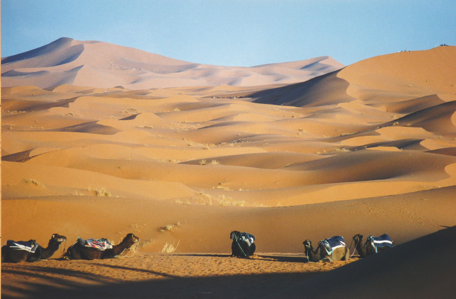 Wüstenschiffe (an der Mole)