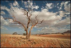 Wüstenwolkendynamik