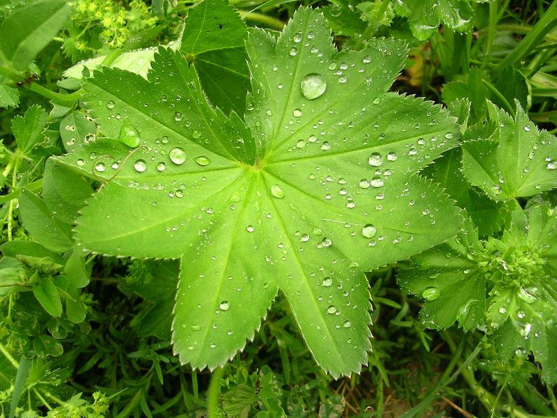 Wunderbar wenn es mal regnet !