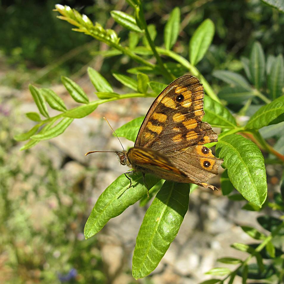 Wunderbarer Mai in Sardinien / Splendido mese maggio in Sardegna (104)