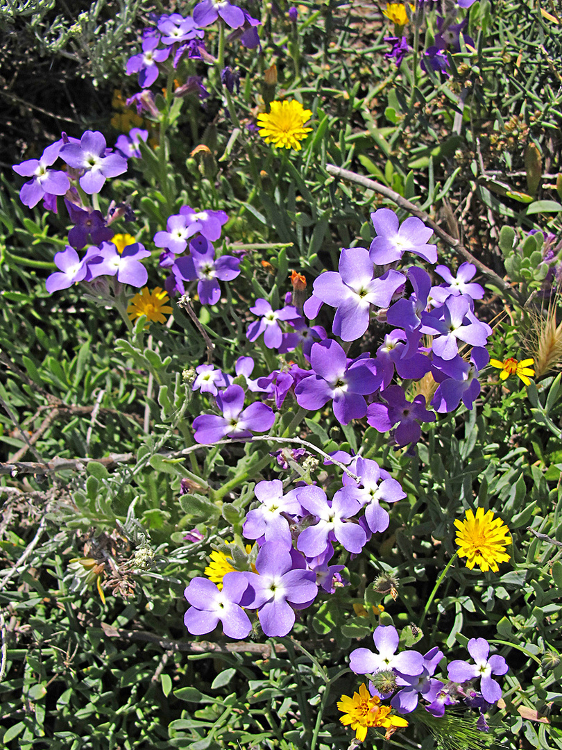 Wunderbarer Mai in Sardinien / Splendido mese maggio in Sardegna (34)