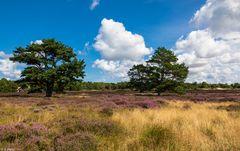 Wunderbares Hiddensee - in der Heide unterwegs (1)