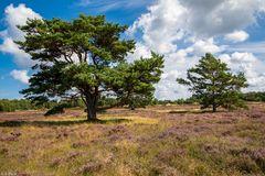 Wunderbares Hiddensee - in der Heide unterwegs (2)