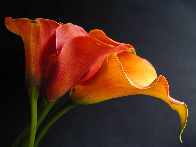 wunderschöne Blumen!!!!