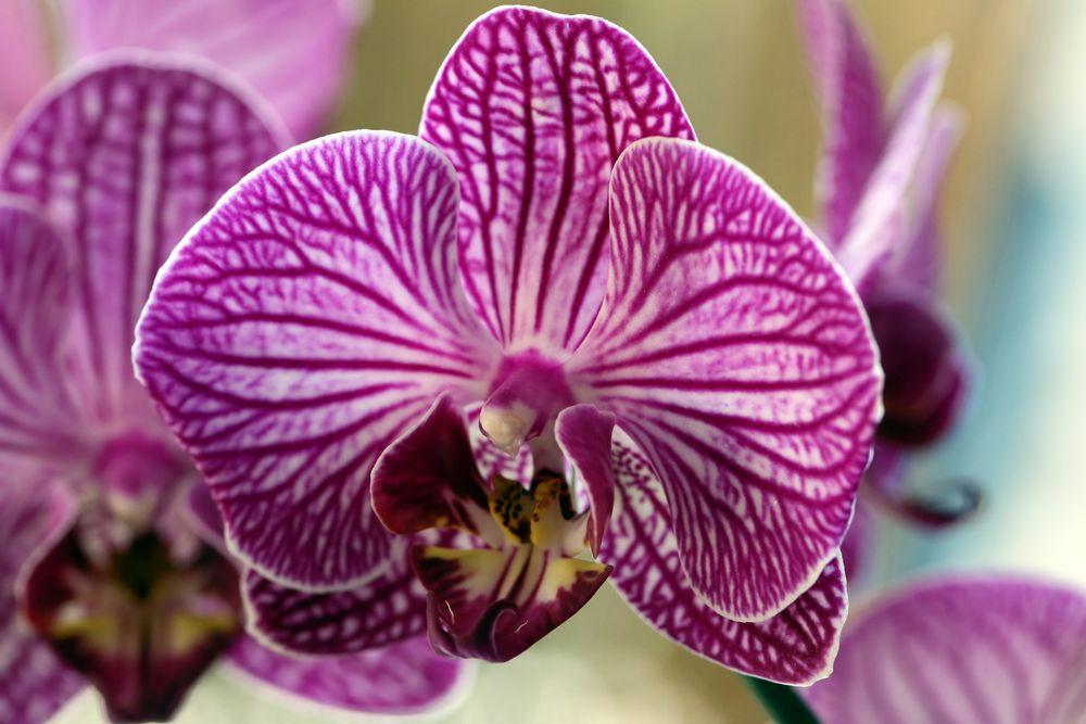 Wunderschöne Orchidee auf der Fensterbank