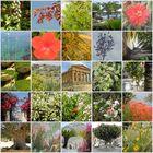 Wunderschöne Pflanzenwelt auf Sizilien