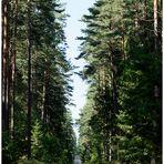 wunderschöne Wälder
