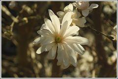 Wunderschöner Frühlingsbeginn...........
