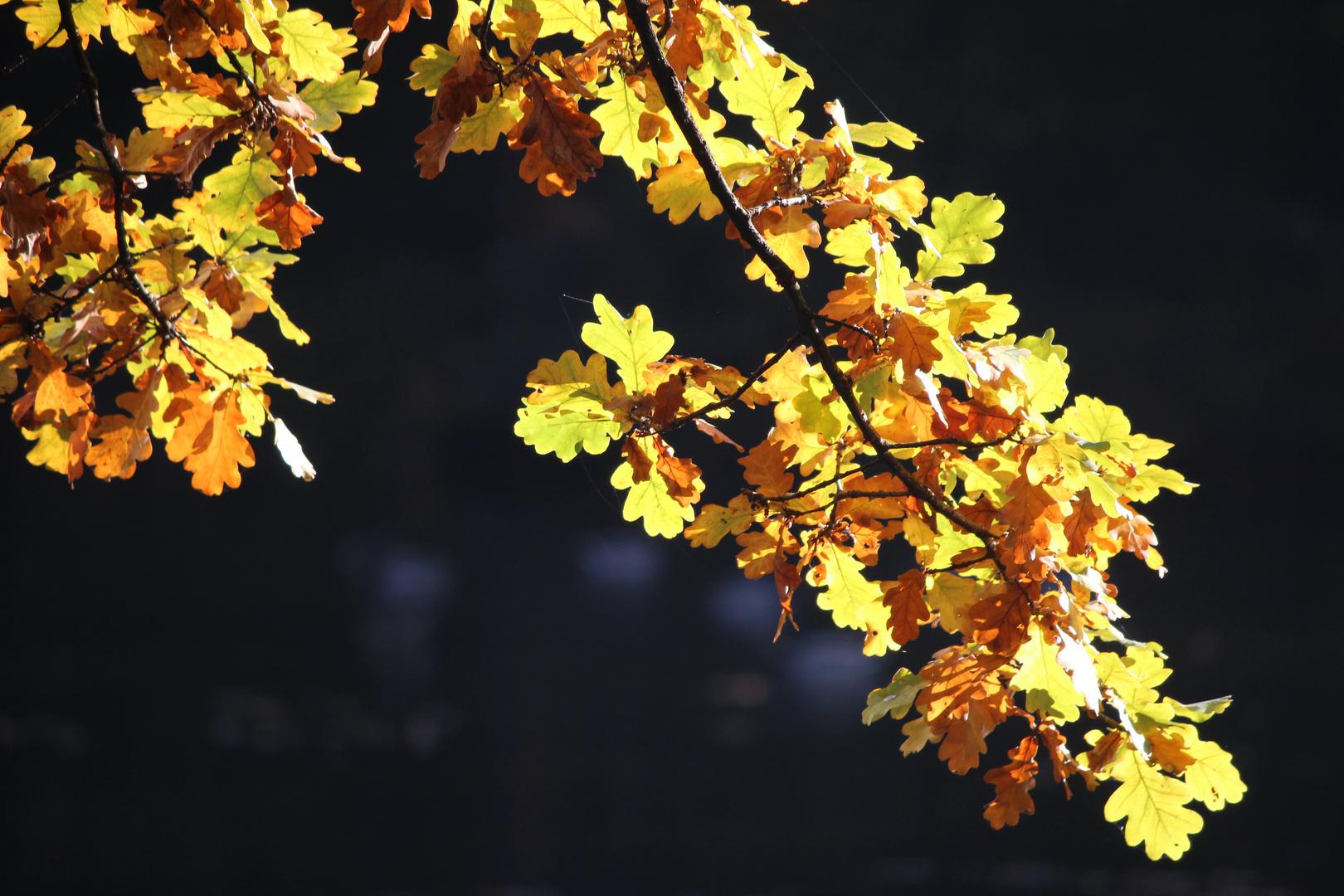 wunderschöner Herbst (2)