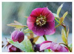 Wunderschöner Regen
