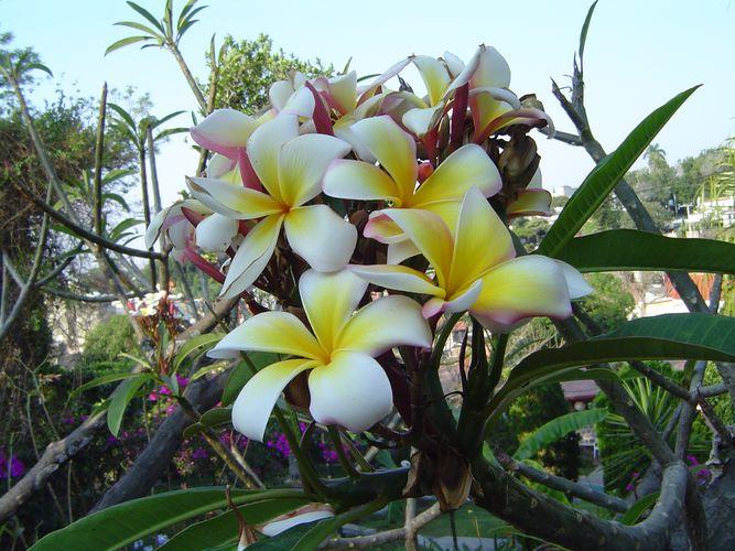 Wundervolle Blüten