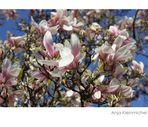 Wundervolle Blütenpracht