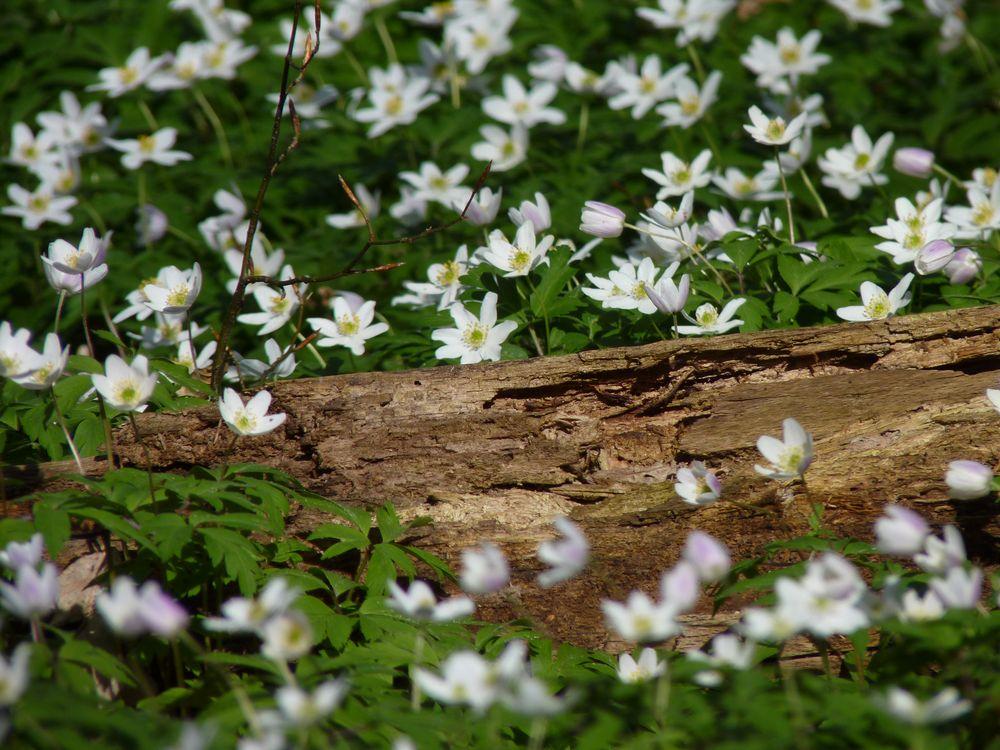 Wundervoller Frühling 12