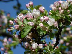 Wundervoller Frühling 17