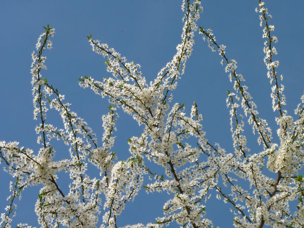 Wundervoller Frühling 6