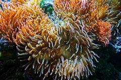Wunderwelt unter Wasser (1)