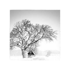 .Wunsch.Baum.