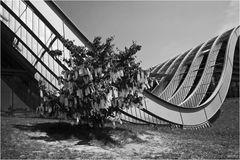Wunschbaum (by Yoko Ono)