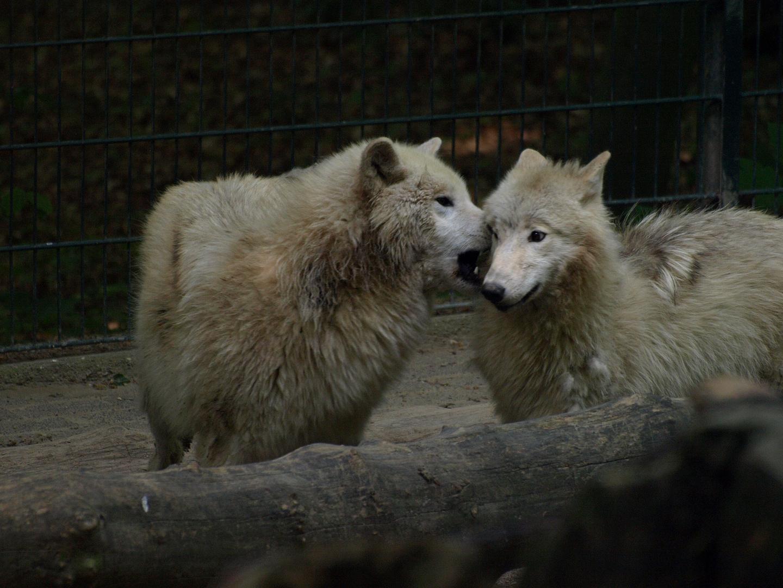 Wuppertaler Zoologischer Garten #21