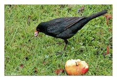 Wurm oder Apfel ?
