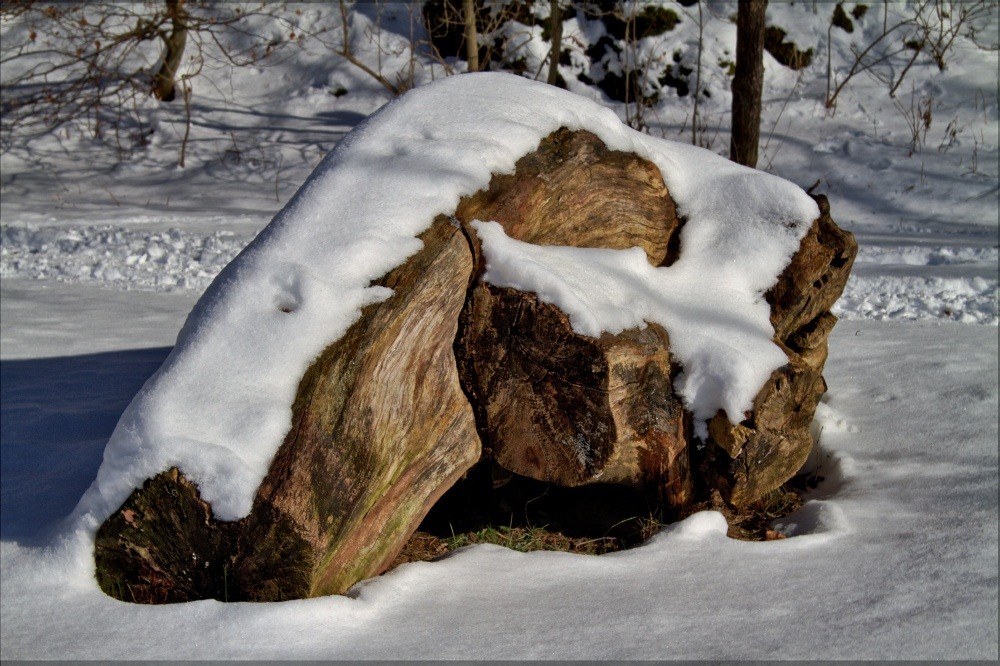 Wurzel im Schnee