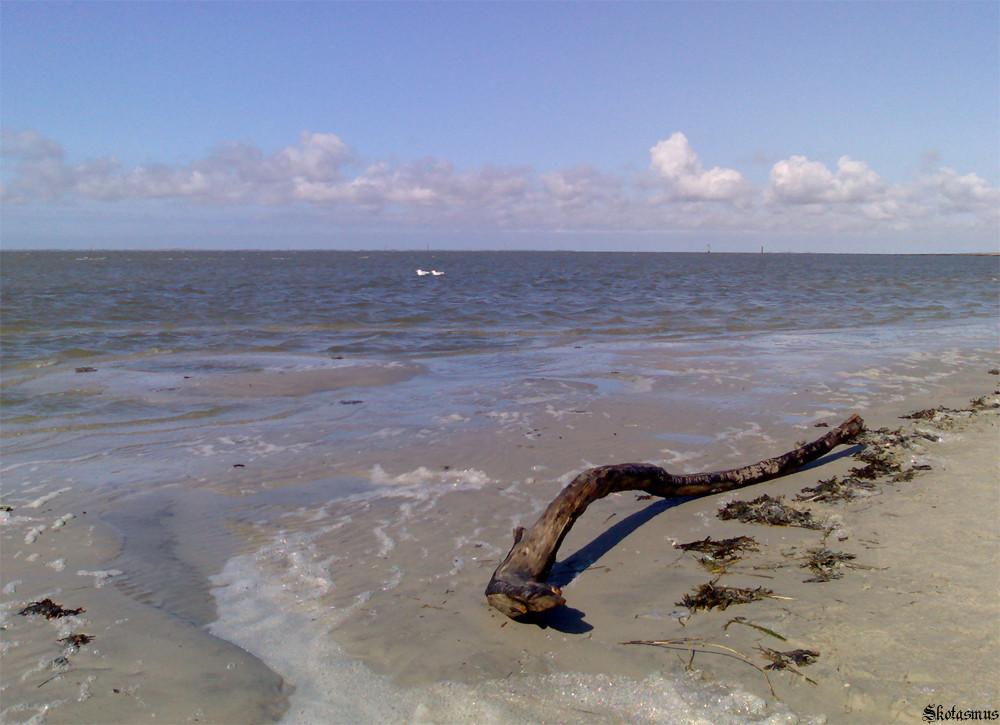 Wurzel Strandgut Nordsee Foto & Bild