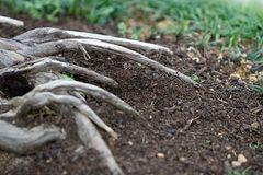 Wurzeln im Japanischen Garten