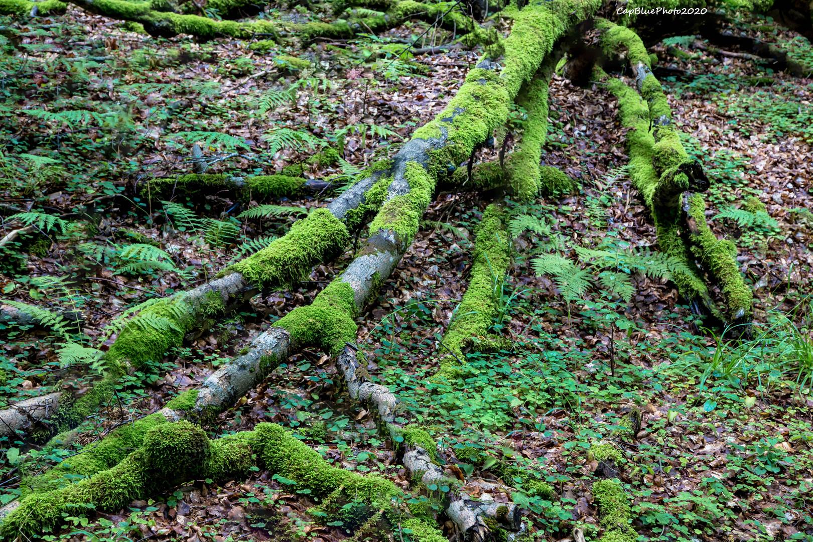 Wurzelstrukturen mit Moos an einem Baum
