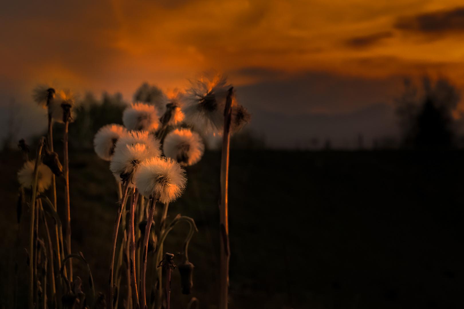 Wuschelköpfe im Abendlicht