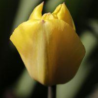 www.foto-galerie.eu