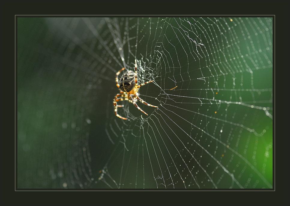 www.spiderwoman@web.de