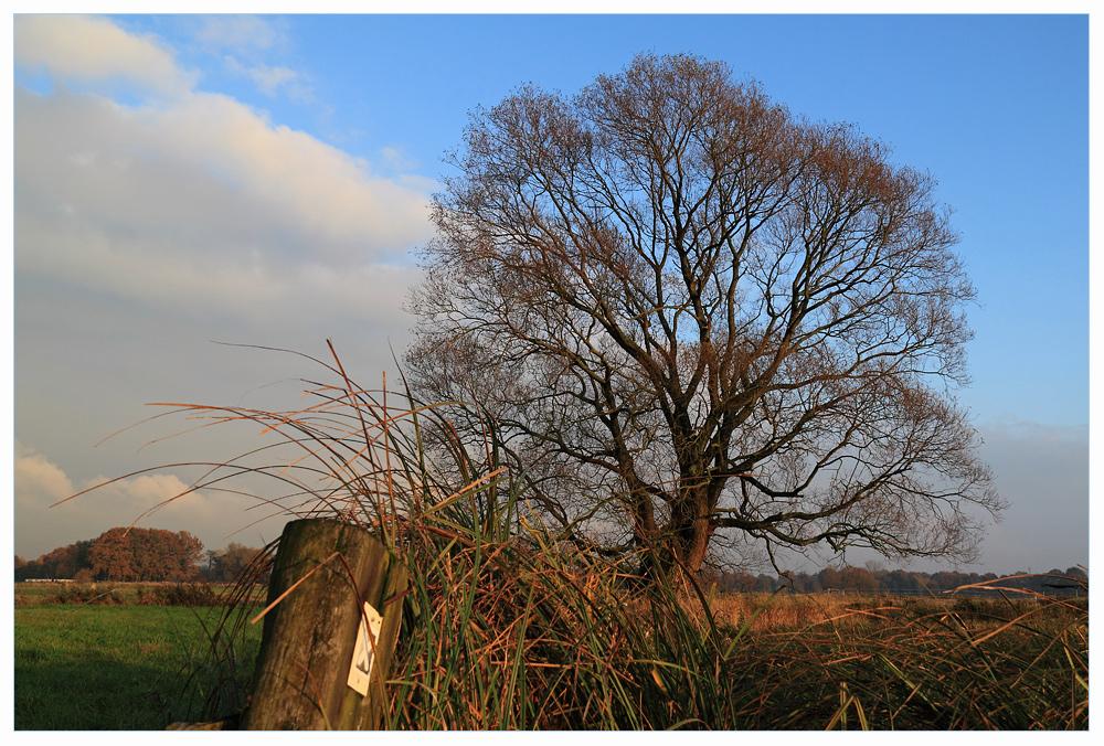 X---Tree