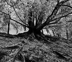 x - tree