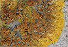 Xanthoria parietina - die Wand-Gelbflechte ...