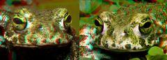 XKröten 3-D für Rot/Cyan Brille